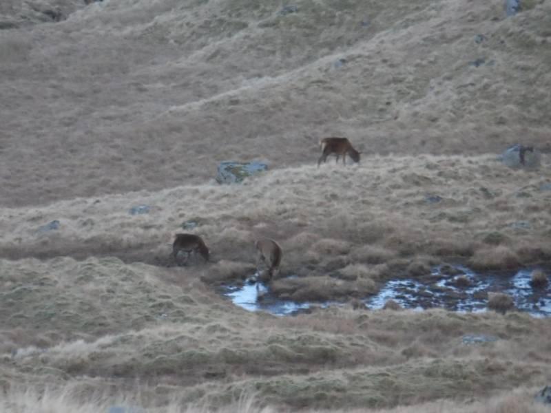 6-red-deer-glen-noe